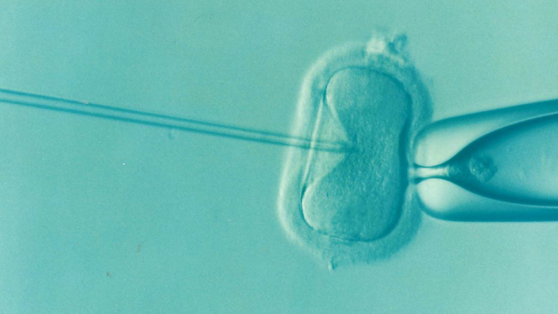 how does IVF work - fertilization