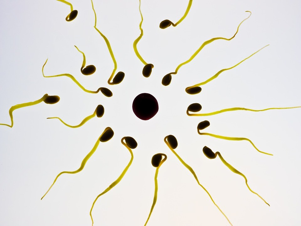 The Truth About Male Infertility