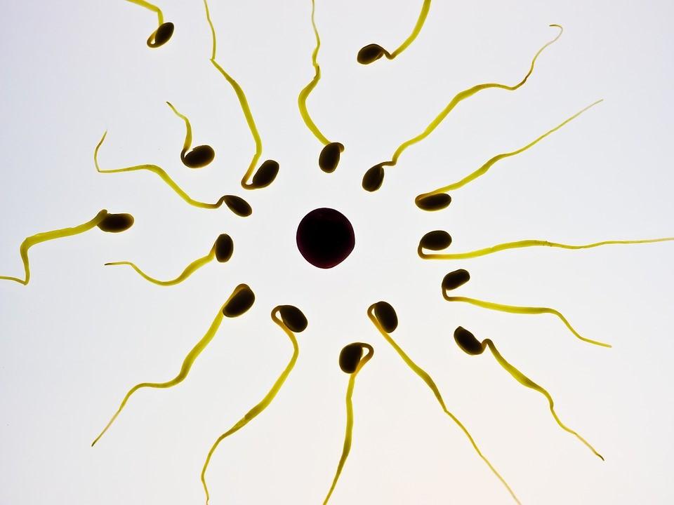 Die Wahrheit über männliche Unfruchtbarkeit